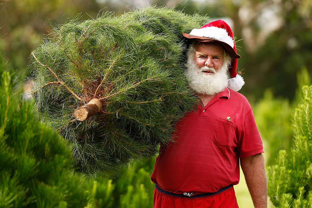 A man dressed as Santa Claus helps families choose their own trees at Sydney Christmas Tree Farm at Duffy's Forest on December 13, 2014 in Sydney, Australia. People avidly select their chosen tree from over 4,000 available before cutting it down and transporting it back to their home in time for Christmas festivities. (Photo by Brendon Thorne/Getty Images)