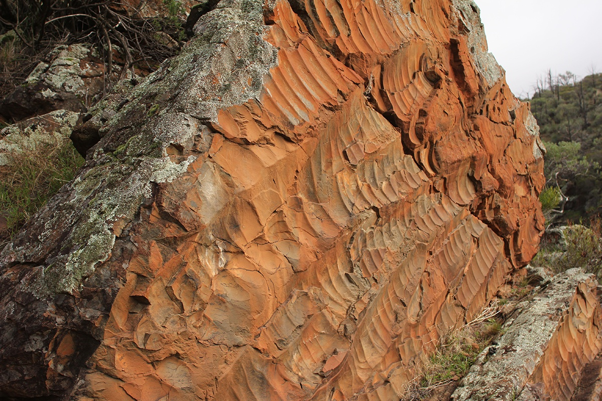 Ripples in the Elatina Formation in South Australia. (Ryan Ewing/Texas A&M University College of Geosciences)