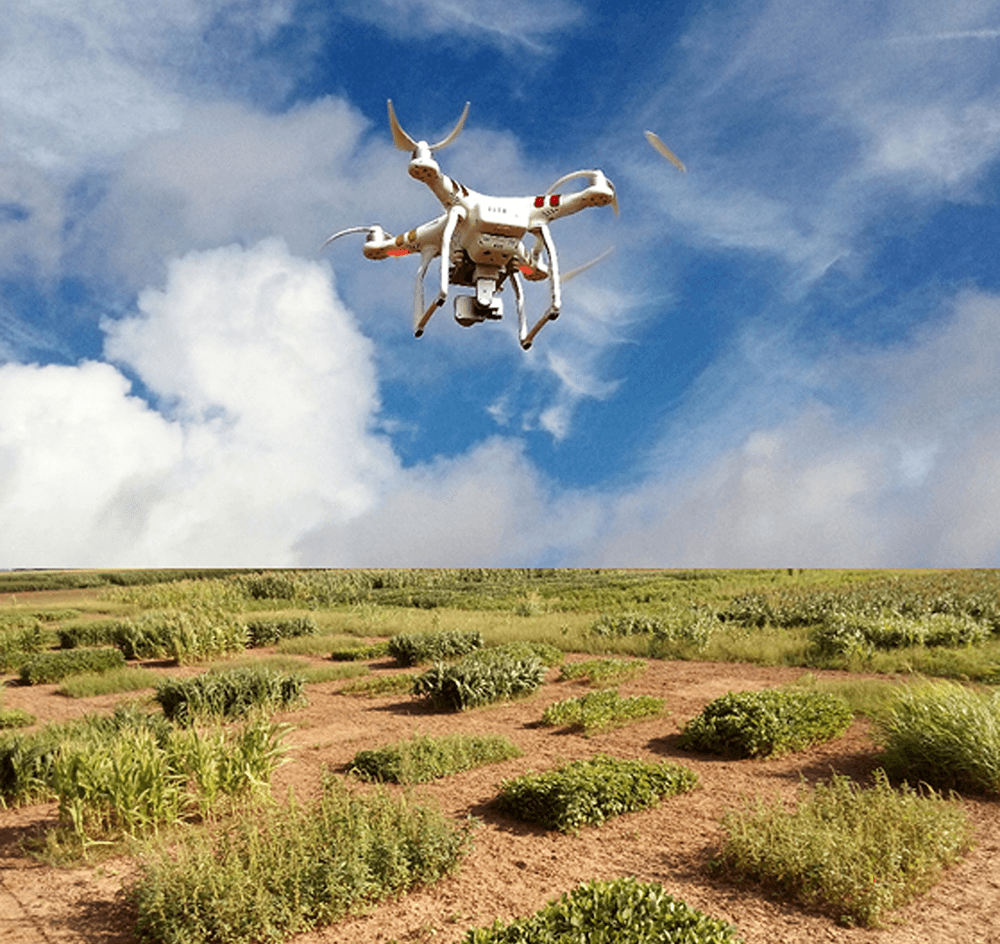 A rotary wing drone captures images over a weed research plot at Texas A&M University, College Station. (Texas A&M AgriLife photo by Dr. Muthu Bagavathiannan)